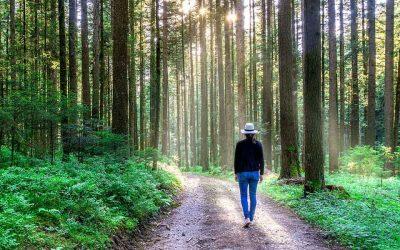 Quais os benefícios da caminhada?